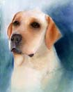 Yellow Lab Portrait