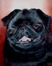 Black Pug Watercolor Painting